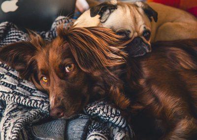 sacs à crottes pour chien biodégradable