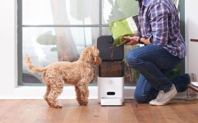 distributeurs automatiques de croquettes pour chien et chat