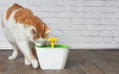 fontaines à eau pour chats