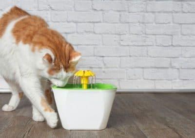 meilleure-fontaine-eau-chat